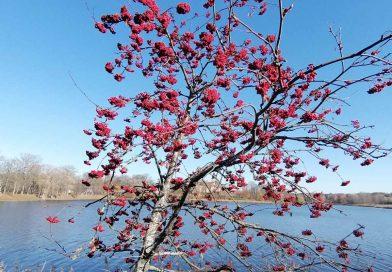 Белгидромет: конец октября будет по-осеннему комфортным