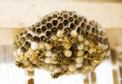 Специалист рассказал, что делать, если вы обнаружили гнездо  жалоносных насекомых