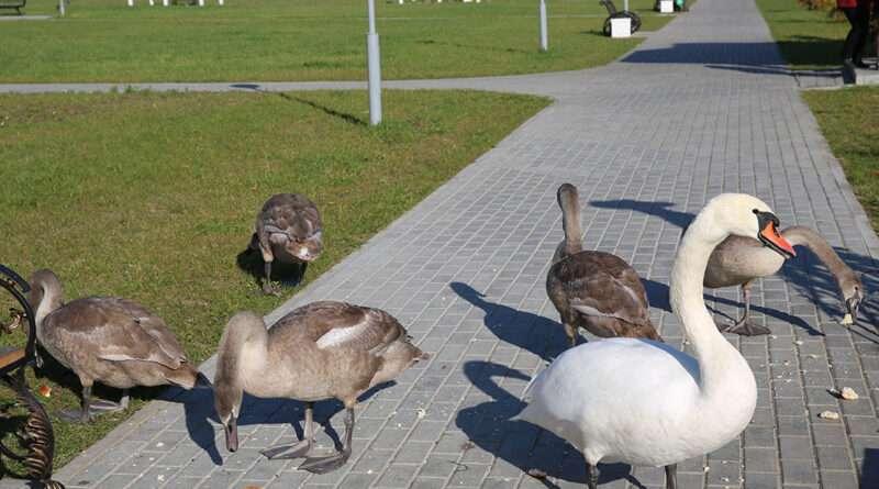Не кормите диких птиц хлебом!