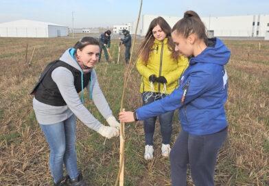 Трудовой десант высадил молодые клены возле Несвижского завода детского питания