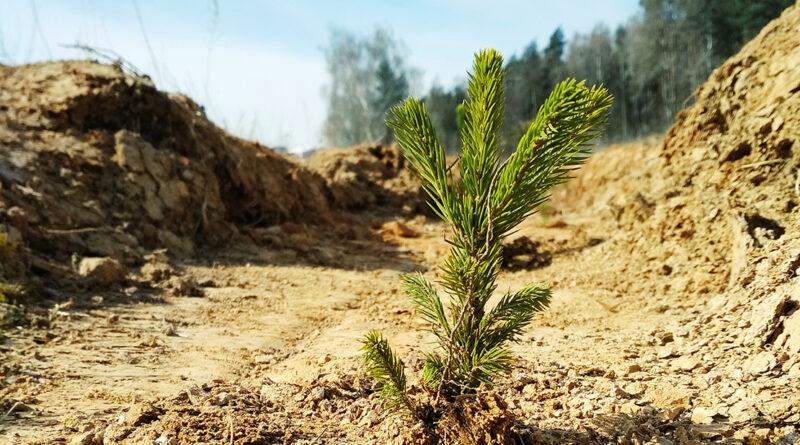 С 28 марта по 4 апреля ГЛХУ «Клецкий лесхоз» приглашает на акцию «Неделя леса- 2020»